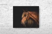 """Картина на холсте """"Лошадь"""" 40х33см"""