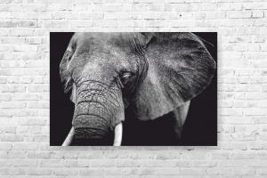 "Картина на холсте ""Слон"" 44смх30см"